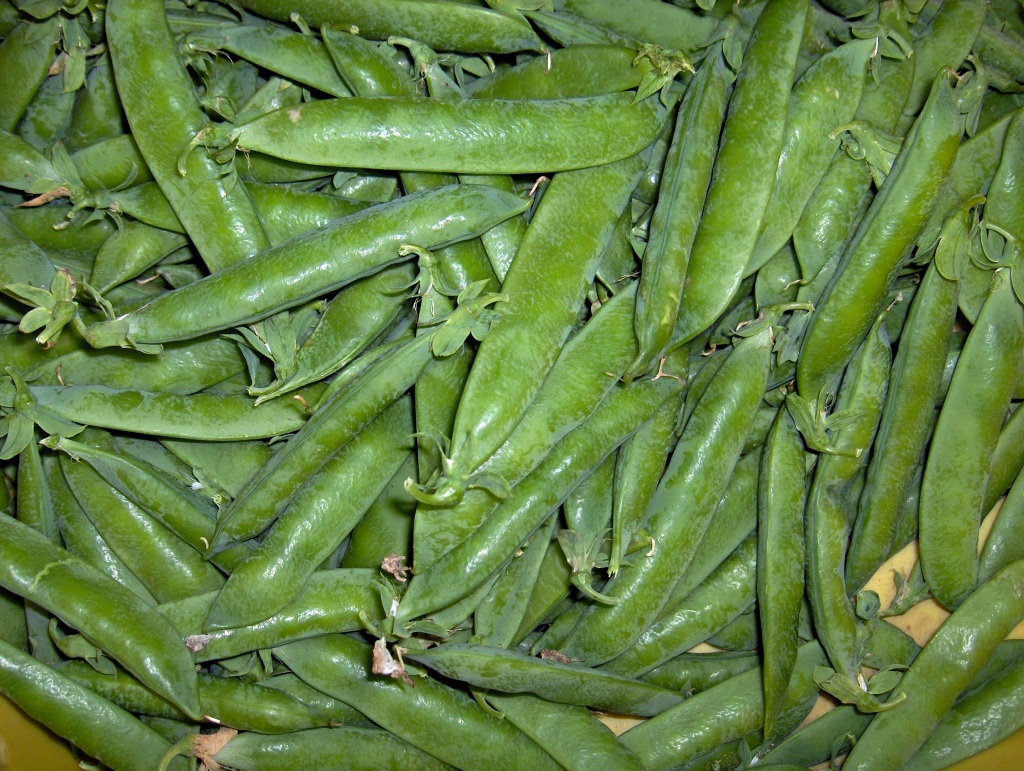 This image has an empty alt attribute; its file name is garden-peas-hpim3287.jpg