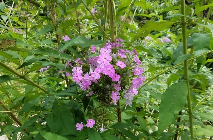 Pretty Weeds 20200820_133121 (2)