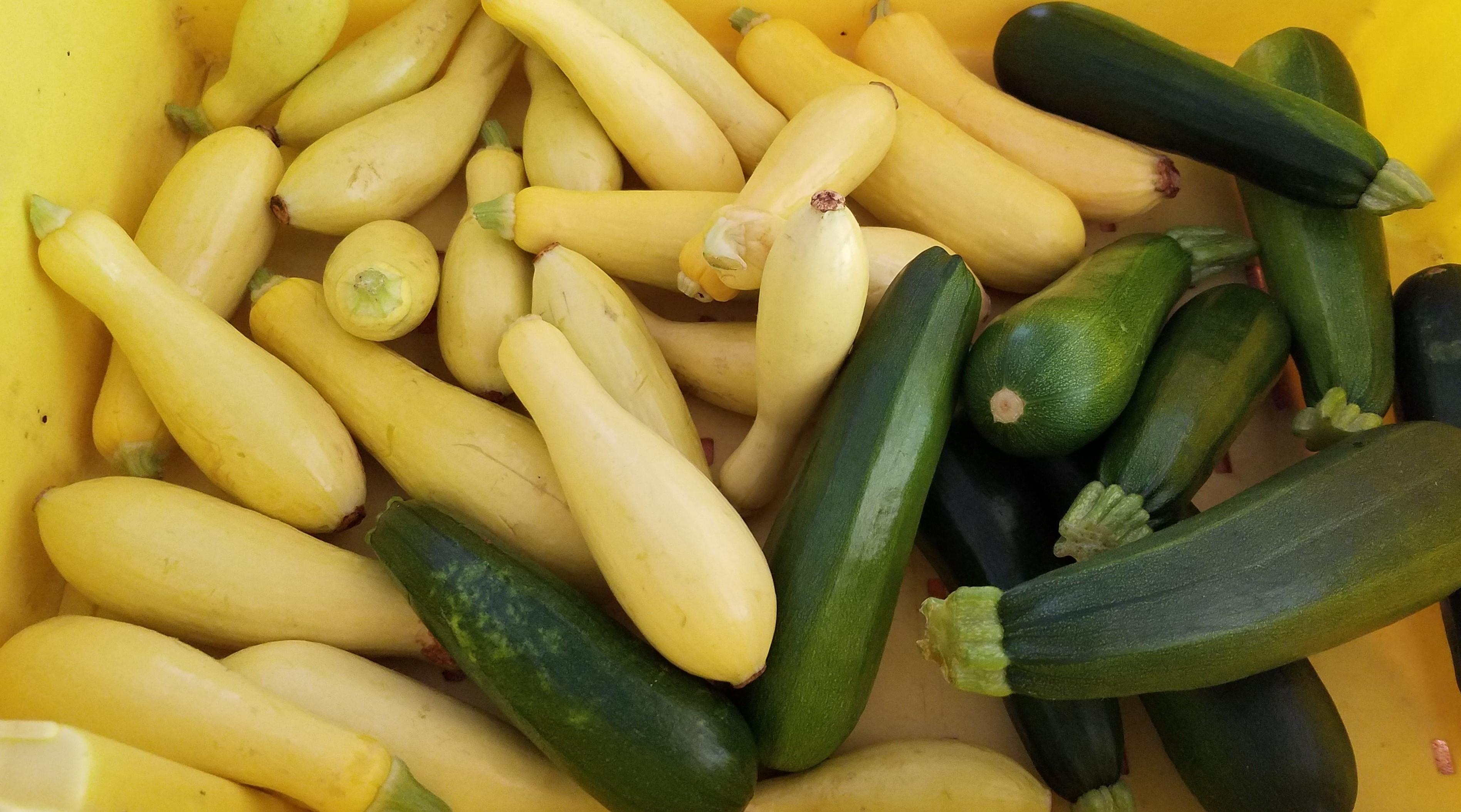 Squash & Zucchini 20200817_173451 (3)