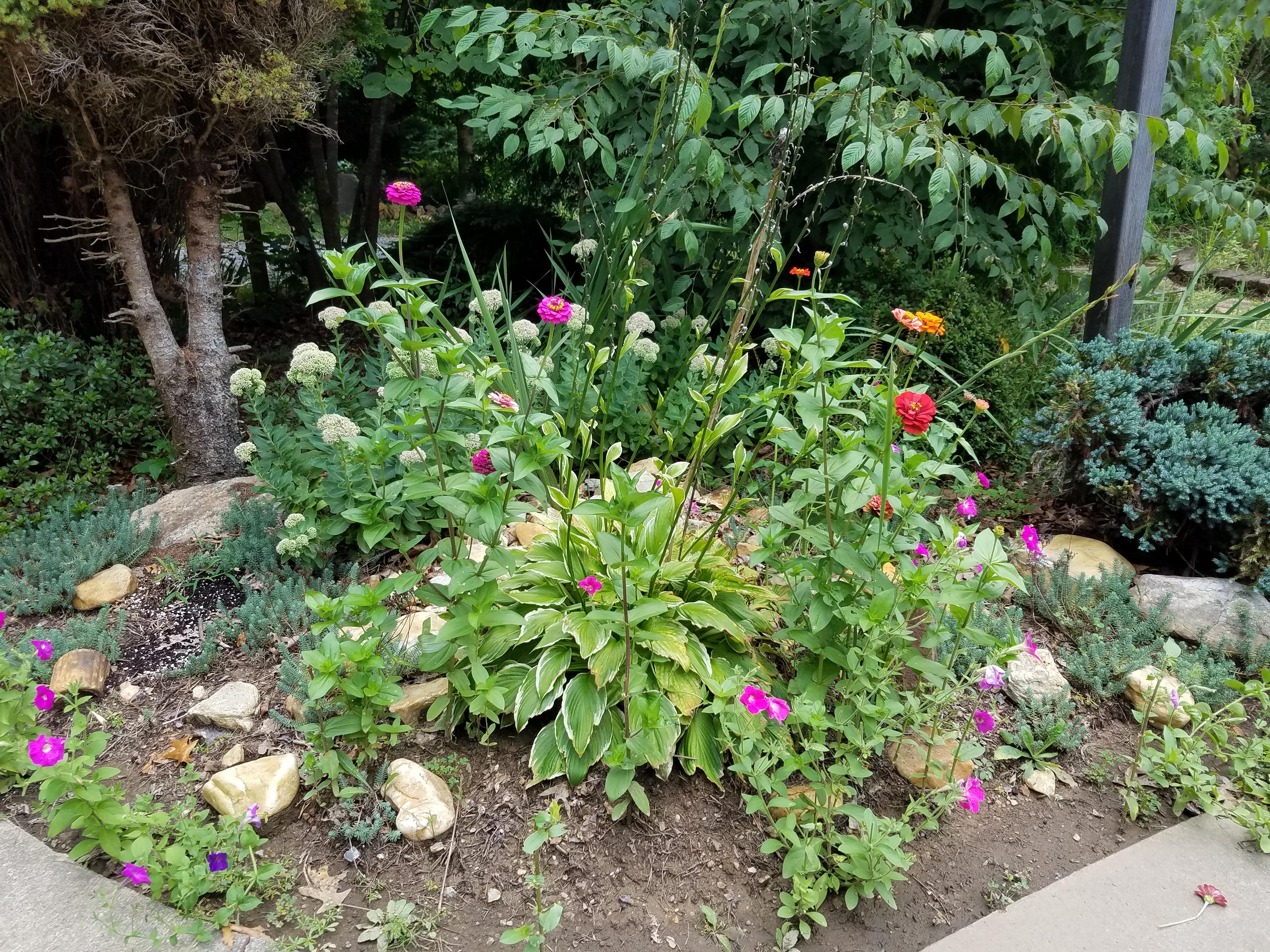 Summer Flowers 20200820_132407