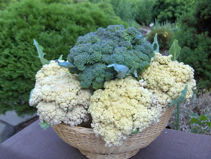 This image has an empty alt attribute; its file name is broccoli-and-cauliflower.jpg